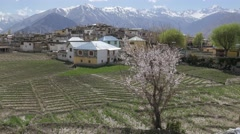 View of village with blossoming tree,Nako,Kinnaur,India Stock Footage