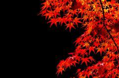 Colorful Autumn Leaf season Stock Photos