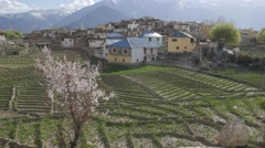 View village with blossoming tree,Nako,Kinnaur,India Stock Footage