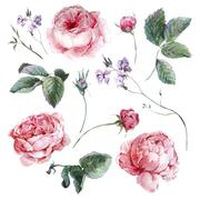 Set vintage watercolor bouquet of roses leaves branches flowers and wildflowers - stock illustration