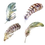 Set vintage watercolor feathers - stock illustration
