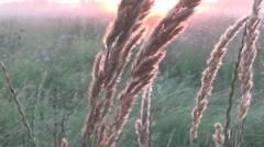 Sun, thistle, wormwood Stock Footage