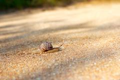 Snail crawling forward - stock photo