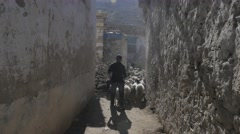 Goats walking through streets,Nako,Kinnaur,India Stock Footage