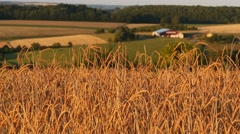Wheat Field With Farm Buildings In The Background Stock Footage