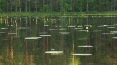 Calm lake water with flying insects Stock Footage