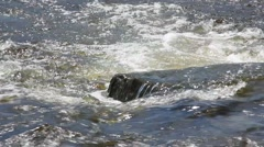 River Rapids and Current Stock Footage