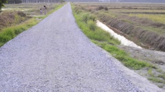 Long stretch of rocky path alongside paddy fields. - stock footage