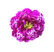 Magenta artificial flower isolated - stock photo