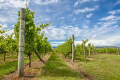 Tasmania Vineyards Stock Photos