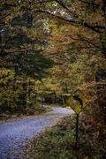 Fall color shot up road sign Kuvituskuvat