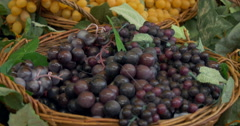 Bunches of grapes Stock Footage