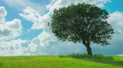 Time-lapse of green tree growing in field under cloudy sky. Weather forecast Stock Footage