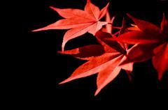 Colorful Autumn Leaf season - stock photo