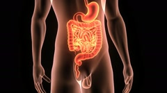 Stock Video Footage of DIGESTIVE SYSTEM WITH BODY