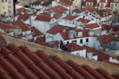 Single Pigeon on Tile Roof Top in Lisbon Portugal - stock photo