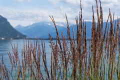 View on mountains and lake Geneva - stock photo