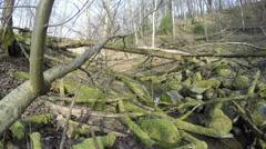 Fallen mossy tree trunks on spring brook water. 4K Stock Footage