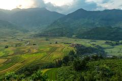 Rice harvest.Mu cang chai,Yenbai,Vietnam. Stock Photos