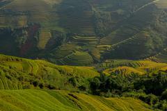 Terraced rice field in rice season - stock photo