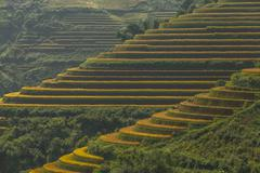 Beautiful Rice Terraces, South East Asia Stock Photos