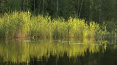 Passing shore reeds at a calm lake Stock Footage