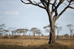 Landscape of Serengeti plain, Tanzania, Africa - stock photo