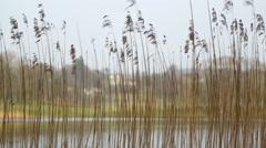 Swaying water reeds on lake windermere Stock Footage