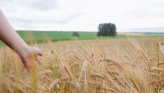 Male run hand over wheat Stock Footage