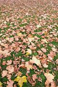 Fall background with dry leaves in autumn - stock photo