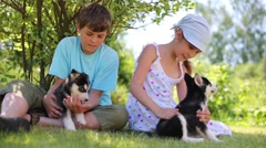 Boy and girl sit on grass and play with two puppies husky in park Stock Footage