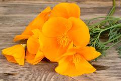 Stock Photo of California poppy (Eschscholzia californica) orange flowers on a wooden