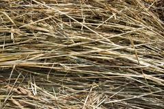 Golden autumn fall hay straw texture background wallpaper Stock Photos