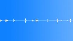 Animals_Bumble Bee_Bombus hypnorum_11 Sound Effect