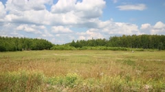 Beautiful meadow with dry grass and small going men at summer day Stock Footage