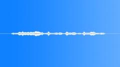 Animals_Bumble Bee_Bombus hypnorum_14 Sound Effect