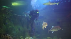 Diver in aquarium at Oceanarium Sochi Discovery World Aquarium Stock Footage