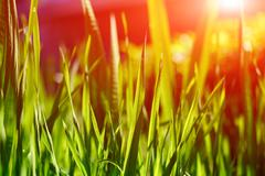Stock Photo of green leaves and grass