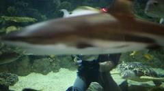 Diver feeds fishes at Oceanarium Sochi Discovery World Aquarium Stock Footage