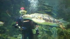 Stock Video Footage of Diver feeds turtle at Oceanarium Sochi Discovery World Aquarium