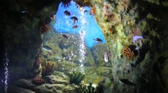 Many small fishes swim in water of cave in oceanarium Stock Footage