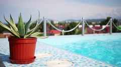 Tropical plant in pot near blue pool on terrace at summer day Stock Footage