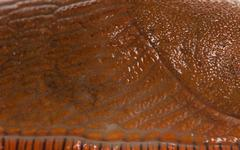 Close-up of Red slug skin, Arion rufus - stock photo