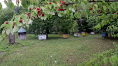 Apiary in the trees, grass and flowers. Ukraine. Europe Stock Footage