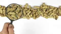 Hand with magnifying glass over the peanut nuts, moves along Stock Footage