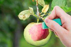 hand deletes green apple by rubber eraser - stock photo