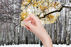 hand deletes winter forest by rubber eraser - stock photo