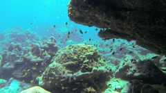 Undersea cliff with lots of small tropical fish Stock Footage
