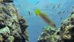 Underwater wide angle shot of rocky landscape with lots of small fish Stock Footage