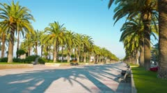 4k Europe, palm trees promenade, sunny summer day Stock Footage